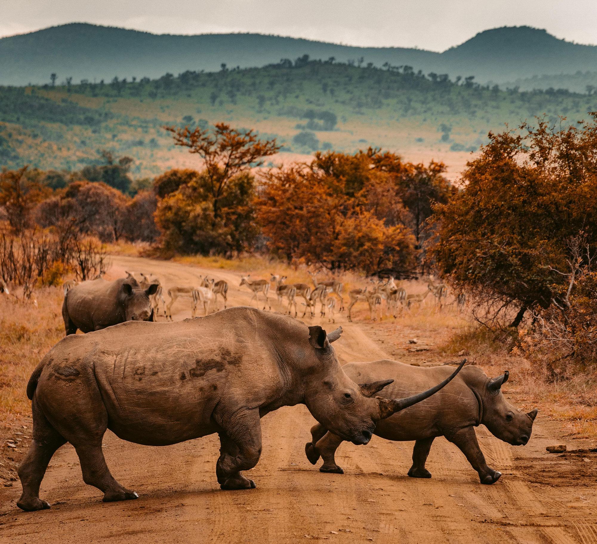 Aren't all Rhinos grey?