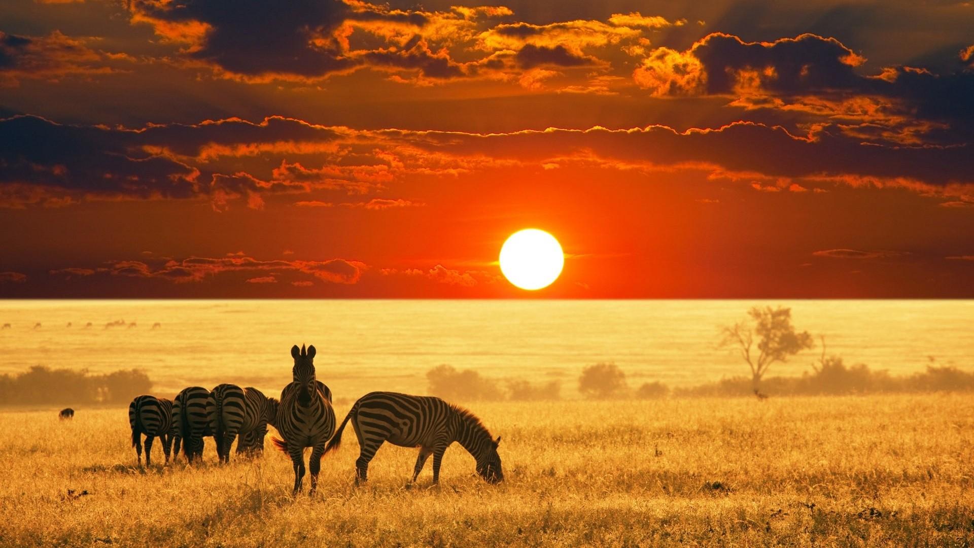 African-safari-animals-wallpaper-HD