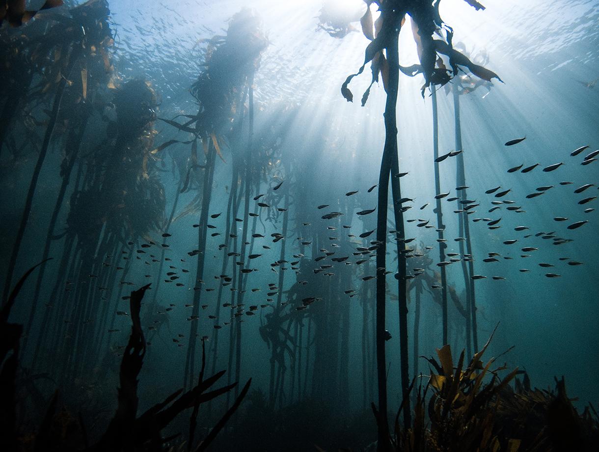seaforest